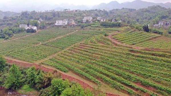 新电商助农模式助力乡村振兴